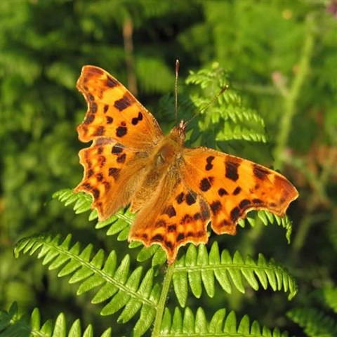 Wildlife and Butterflies