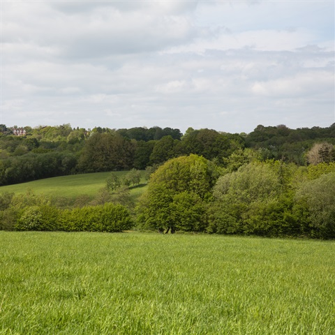Farnell Farm Fields