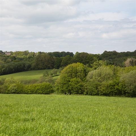 Farnell Farm Fields