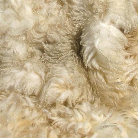 Rare Breed Portland Wool Fleeces